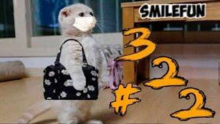 КОТЫ 2020 Смешные Кошки Приколы С Котами и Котиками Funny Cats