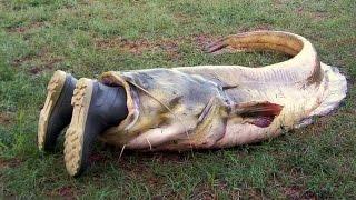 Видео подборка приколов - случаи на рыбалке Русская рыбалка с лодки Видео Приколы