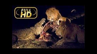 Ночь льва NET GEO документальные фильмы о животных