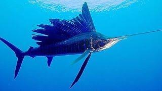 Самые опасные животные — Морские глубины (Документальные фильмы, передачи HD)