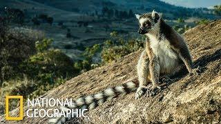 Мадагаскар - отдельный мир (National Geographic)