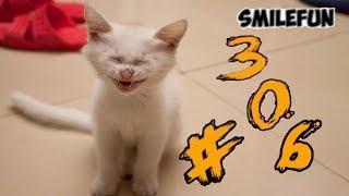 КОТЫ 2020 ПРИКОЛЫ С КОШКАМИ Смешные Коты и Котики 2020 Funny Cats