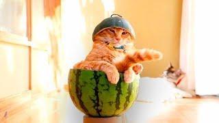 ПРИКОЛЫ С КОТАМИ — Смешные коты и кошки 2018