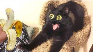ЛУЧШИЕ ПРИКОЛЫ С ЖИВОТНЫМИ 2019 Смешные видео Коты Кошки Собаки Попугаи Обезьяны