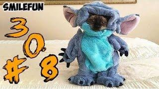 КОТЫ 2020 ПРИКОЛЫ С КОШКАМИ И КОТАМИ Смешные Коты и Кошки  funny cats 2020