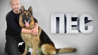 """Сериал """"Пёс"""" 1 сезон 9  серия Фильм Боевик Криминал Видео Русские сериалы"""