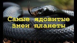 Самые ядовитые змеи планеты. Мир природы. Документальные фильмы о животных