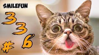 КОТЫ 2020 Смешные Коты Приколы С Кошками и Котами 336 Funny Cats