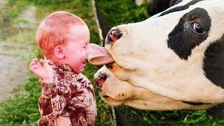 FUNNY VINE ★ Самые смешные дети и животные на ферме || Funny Babies and Animals Videos