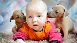 Дети и животные 2 ● Приколы с животными осень 2014 ● Dogs, Cats & Cute Babies Compilation ● Part 2