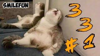 КОШКИ 2020 Смешные Коты Приколы С Котами и Кошками 331 Funny Cats