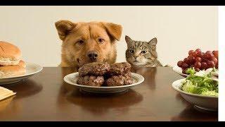 Смешные Приколы с Животными до слез, смешные коты