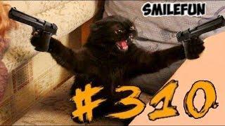 КОШКИ ПРИКОЛЫ С КОШКАМИ И КОТАМИ Смешные Кошки 2020 Funny Cats