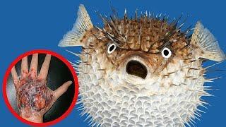 5 Самых ЯДОВИТЫХ животных в мире! Тайпан. Рыба фугу. Банановый паук и др!