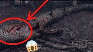 Анаконда - Коралева Змей Документальный фильм