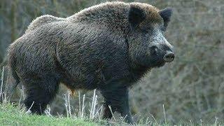 10 самых опасных животных России
