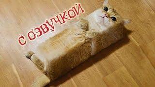 Приколы с котами Смешная озвучка животных САМЫЕ СМЕШНЫЕ ВИДЕО 2018