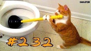 Смешные коты и кошки Приколы с котами до слез (2019) Смешные видео про животных