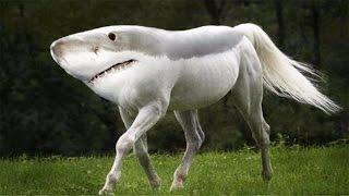 Топ 5 САМЫЕ ОПАСНЫЕ животные в мире. Кто самый опасный в мире животных?