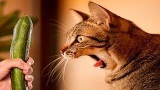 ПРИКОЛЫ С КОТАМИ Смешные коты и кошки 2019 Смешные видео про животных