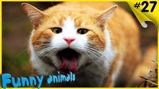 Смешные приколы про животных ТОПовая Подборка животных
