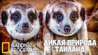 Дикая природа Таиланда (Часть 1 из 2) | Документальный фильм про животных | (National Geographic)