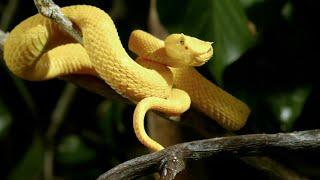 Дикие охотники: Змеи  (Документальный фильм)