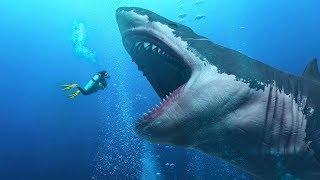 АКУЛЫ Фильм Кино Ужасы Про акул Боевик Триллер Зарубежные фильмы ужасов
