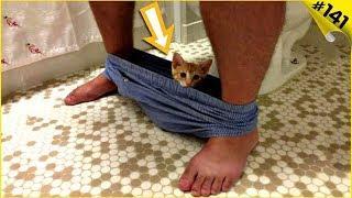 Смешные коты и кошки 2019 Приколы с котами с озвучкой Смешные видео про животных