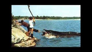 ШОК РЫБАЛКА // ТЫ ТАКОГО НЕ ВИДЕЛ! ПРИКОЛЫ НА РЫБАЛКЕ 2020 / трофейная рыбалка