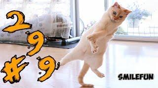 КОШКИ 2020 ПРИКОЛЫ С КОТАМИ Смешные Коты 2020 Funny Cats