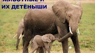 Развивающее видео для детей от года. Дикие животные и их детеныши (Звуки). Умный Ребенок