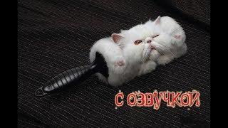 Приколы с котами и смешная озвучкой животных – ТОПовая подборка от PSO