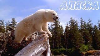 «АЛЯСКА» — Фильм, Приключения / Семейное Кино (перевод Гаврилова)