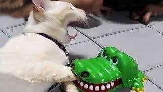 Смешные животные и птицы Новые приколы Смешное видео Юморина