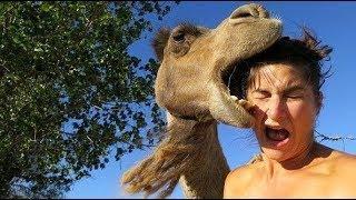 Смешные нападения животных на людей Подборка 2019 Смешные видео про животных
