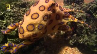 Самые опасные животные  Австралия National Geographic