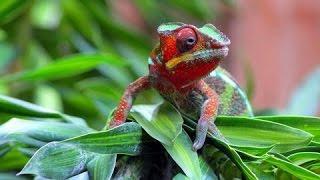 Планета мутантов Австралии - Animal Planet Документальные фильмы о животных