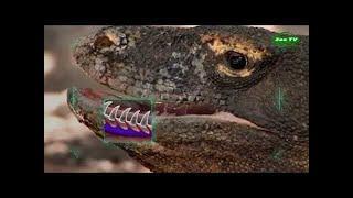 ЯДОВИТЫЕ  Животные - Змеи - Пауки - Лягушки. Cамые Ядовитые Животные Мира