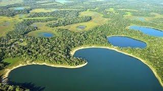 Невероятный дикий мир Бразилии! Документальные фильмы про животных, о природе