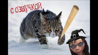 Приколы с котами – Смешная озвучка животных – МЕГА – СБОРНИК – Самые смешные видео 2018 PSO