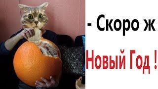 Приколы! СКОРО Ж НОВЫЙ ГОД - МЕМЫ!!! Смешные видео от – Доми шоу!