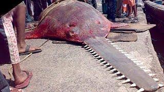 10 Самых Опасных Рыб в Мире, с Которыми Лучше не Связываться