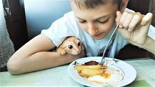 Лучшие приколы с Животными 2018 Вкусная подборка для сладкоежек Коты и Кошки Сладкоежки
