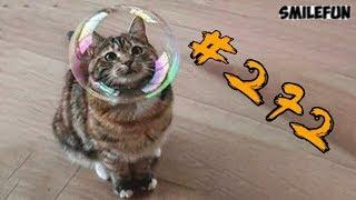 КОТЫ 2019 ПРИКОЛЫ С КОШКАМИ Смешные коты и котики 2019 Funny Cats