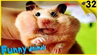 ЖИВОТНЫЕ ПРИКОЛЫ Лучшие приколы с животными подборка смешно