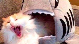 Приколы с Котами — Лучшие приколы с котами и кошками коты видео