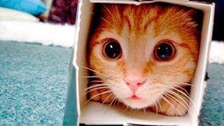 Приколы с Котами - Смешные коты и кошки 2017 || Смешное Видео Корпорация Зла