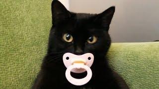 Приколы с кошками и котами #4. Подборка смешных и интересных видео с котиками и кошечками