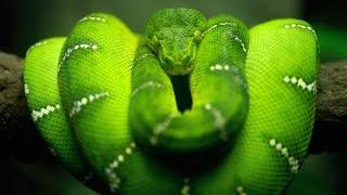 Красота Змей (Документальные фильмы Discovery HD)